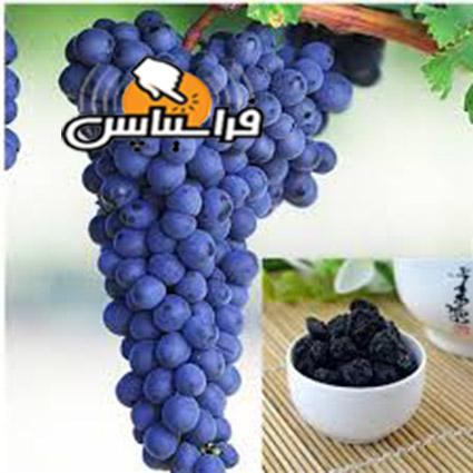 خرید کشمش ارگانیک مویز
