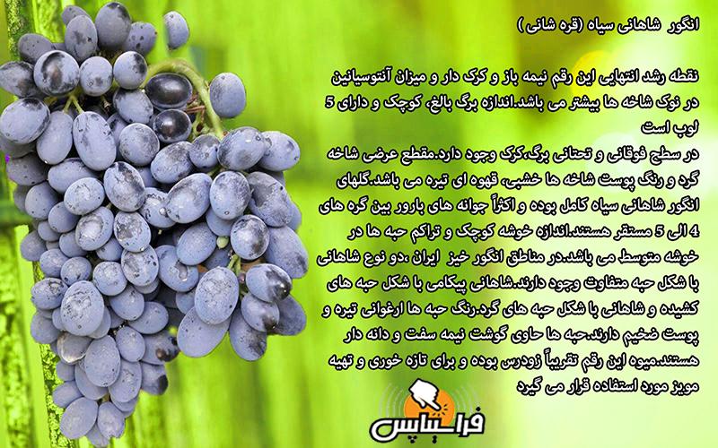 قیمت کشمش مویز هسته دار