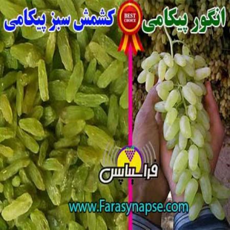 قیمت روز کشمش سبز کاشمر